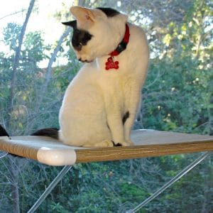 Ultimate Cat Perch –