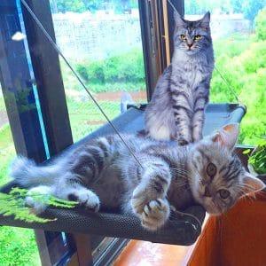 JingStyle Cat Bed Window Perch